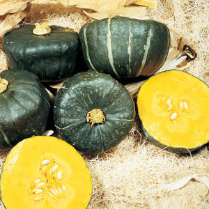 Butter Cup Squash