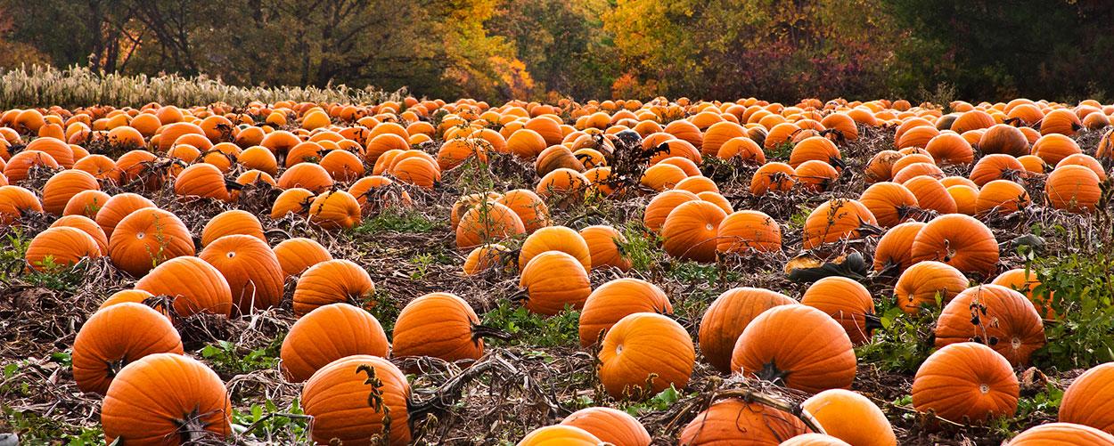 The Pumpkin Place!