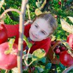 MInnesota Harvest Season at Gilby's