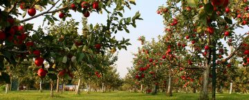 Minnesota Apple Growers