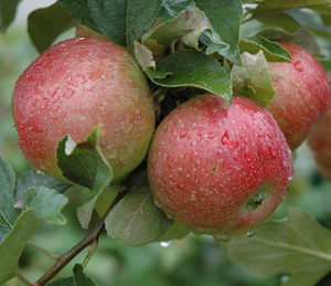 Advanced Apple Growing - April 20, 2019 @ Gilby's Orchard