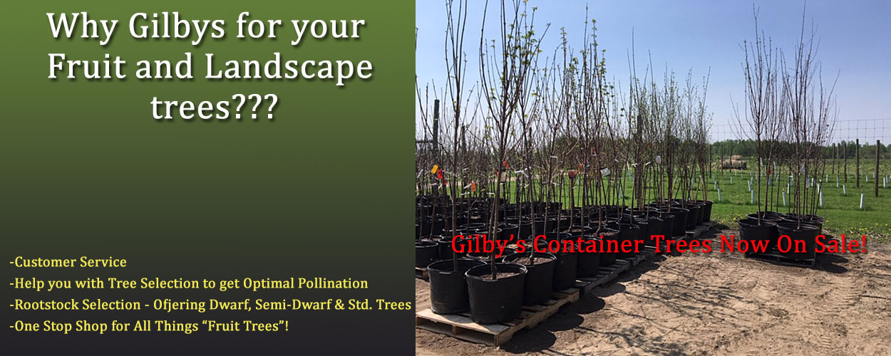 Container Trees Now!