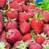June bearing Honeoye Strawberry
