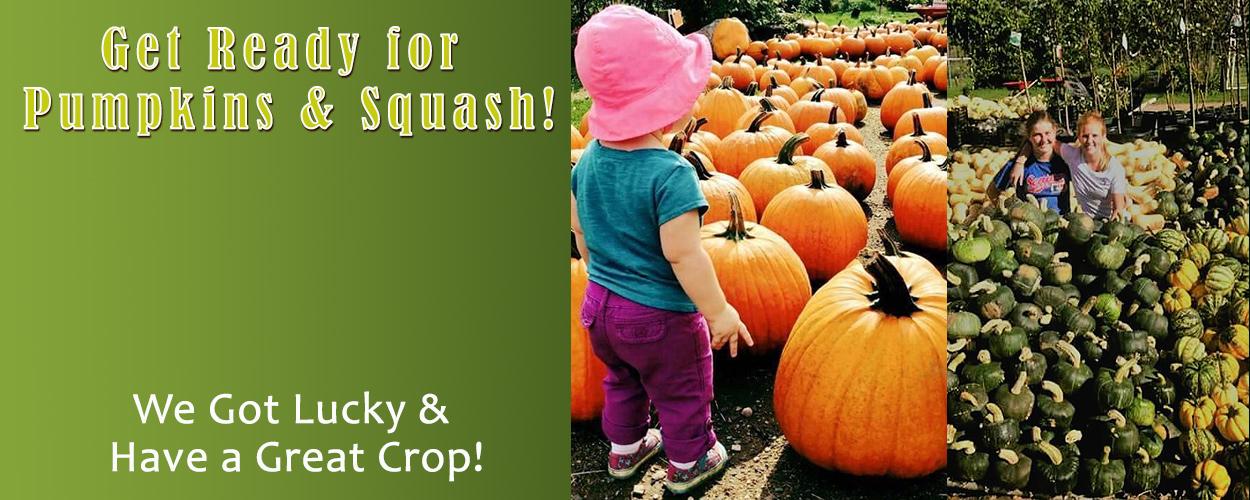 Pumpkins & Squash Galore!